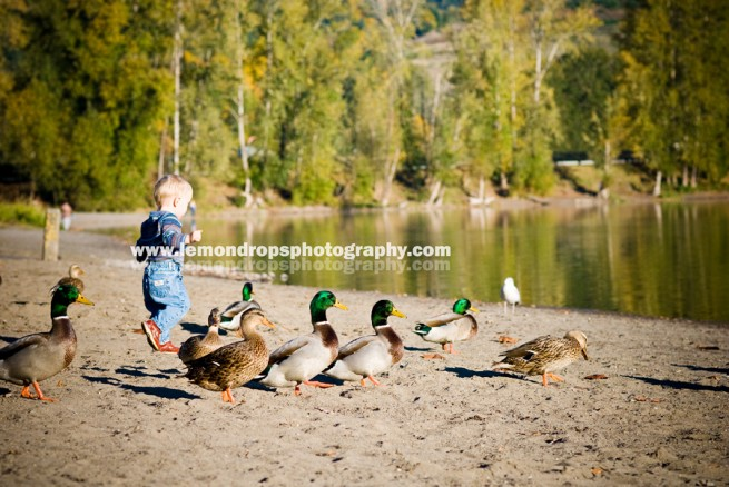 boy walking with the ducks